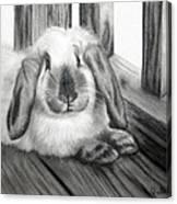 Punky Bunny Canvas Print