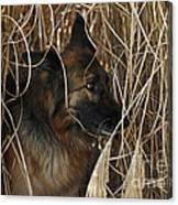 Pup Hiding In Tall Grass Canvas Print