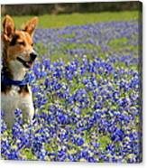 Pup In The Bluebonnets Canvas Print
