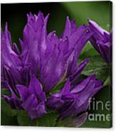 Puple Passion Canvas Print