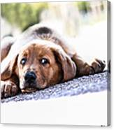 Puppet Dog Canvas Print