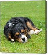 Puppy Asleep With Garden Daisy Canvas Print