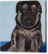 Puppy - German Shepherd Canvas Print