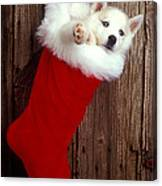 Puppy In Christmas Stocking Canvas Print