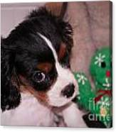 Puppy Look Canvas Print