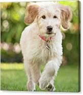 Puppy Running Through The Grass Canvas Print