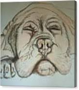 Puppy Sleeping Canvas Print