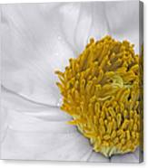 Pure And A Heart Of Gold Canvas Print