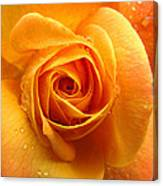 Pure Gold - Roses From The Garden Canvas Print