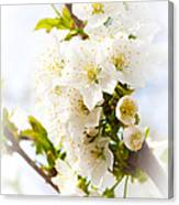 Purity In Nature Canvas Print