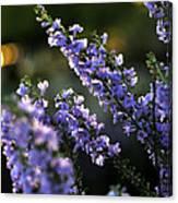 Purple 29987 Canvas Print