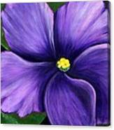 Purple African Violet Canvas Print