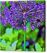 Purple Allium Flower Canvas Print