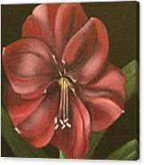 Purple Amaryllis Canvas Print