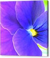 Purple And Blue Viola Canvas Print