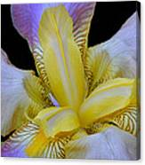 Purple And Gold Canvas Print