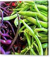 Purple And Green String Beans Canvas Print