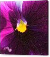 Purple And Pollen Canvas Print