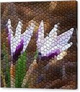 Purple And White Crocus Canvas Print