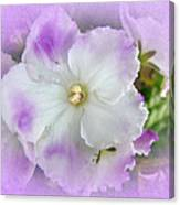 Purple And White Fancy African Violets Canvas Print