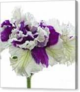 Purple And White Frilly Petunia Canvas Print