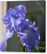 Purple Beauty Iris Canvas Print