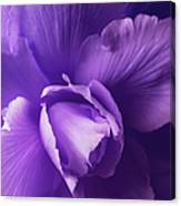 Purple Begonia Flower Canvas Print