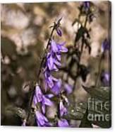 Purple Bells Canvas Print