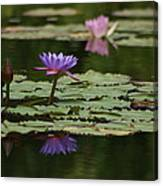Purple Blossoms Floating Canvas Print