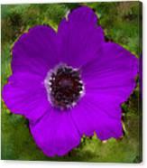 Purple Calanit Magen Canvas Print