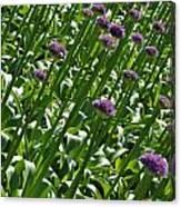 Purple Caps Canvas Print
