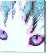Purple Cat Eyes Canvas Print
