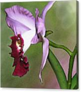 Purple Cattleya Orchid In Profile Canvas Print