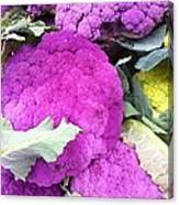 Purple Cauliflower Canvas Print