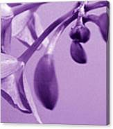 Purple Charm Canvas Print