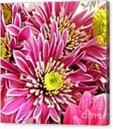 Purple Chrysanthemum Canvas Print