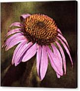 Purple Cone Flower II Canvas Print
