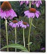 Purple Cone Flowers And Bee Canvas Print