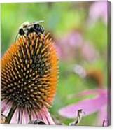 Purple Coneflower And Guest Canvas Print