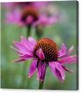 Purple Coneflowers In A Row Canvas Print