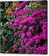Purple Contrast Canvas Print