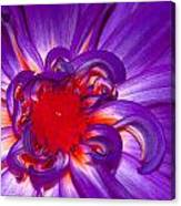 Purple Dahlia Canvas Print