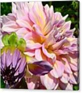 Purple Dahlia With Bud Canvas Print