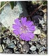 Purple Desert Flower Love San Manuel Arizona Photograph By Feile Case