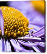Purple Drop Canvas Print