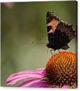 Purple Echinacea Flower Canvas Print