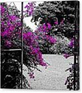 Purple Entrance Canvas Print