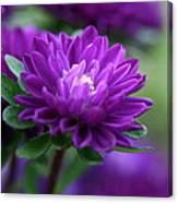 Purple Escape  Canvas Print