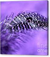 Purple Flight Canvas Print