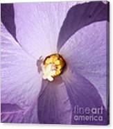 Purple Flower Square Canvas Print